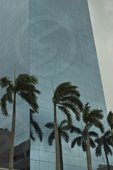 green coconut palm trees beside glass building during daytime photo