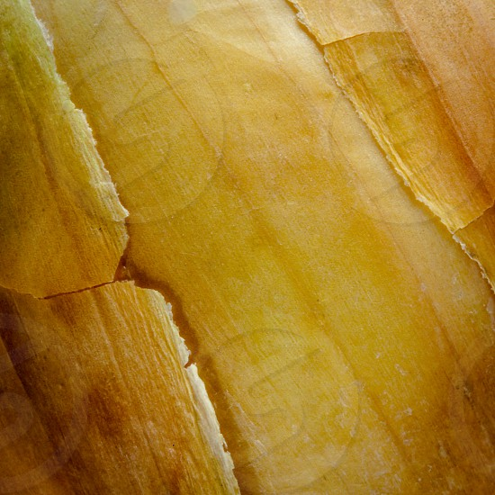 Onion Skin photo