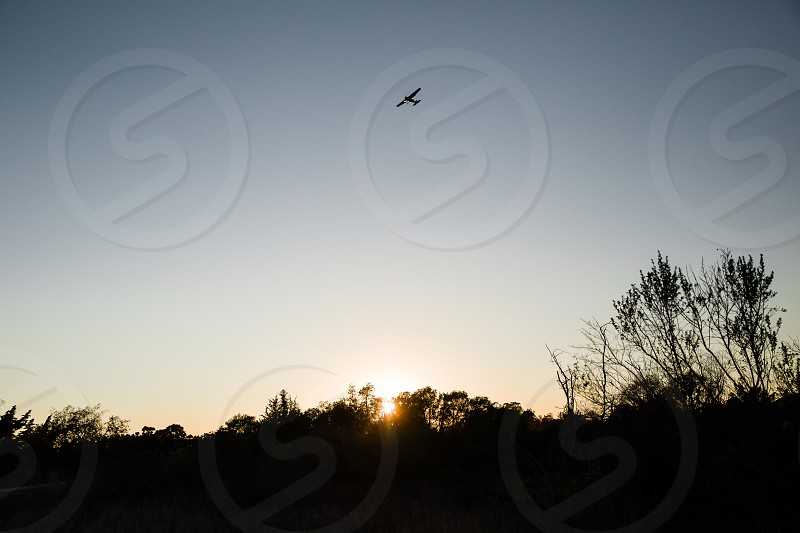 silhouette of bird flying over silhouette of trees under white sky during daytime photo