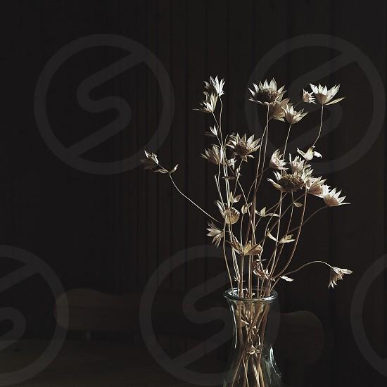 white petaled flower in clear glass vase photo
