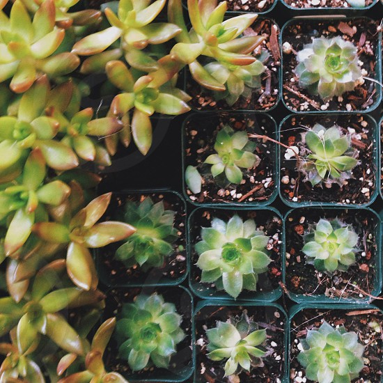 green potted succulent plants photo