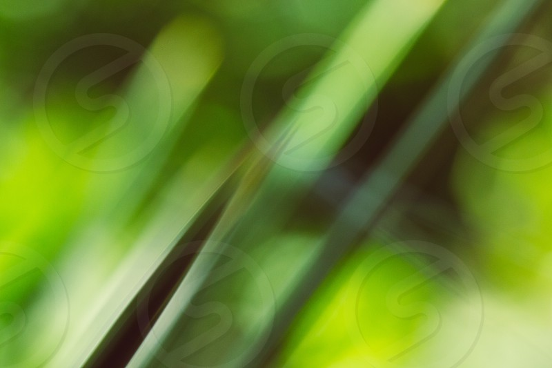 nature plants leaf out of focus photo