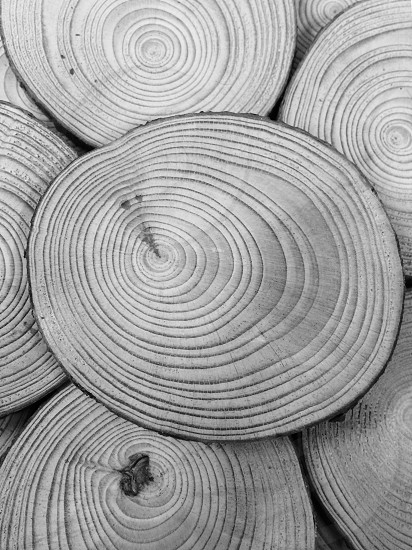 grayscale all-focus photo of log wood grains photo