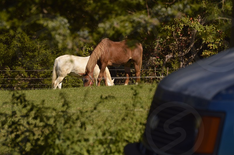 two white and brown horse near tree at daytime photo