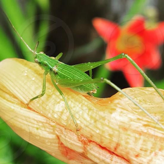 green envy photo