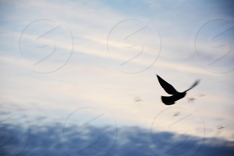 Freedom of flying photo