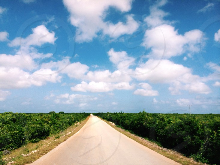 brown road along green plants under stratus clouds photo