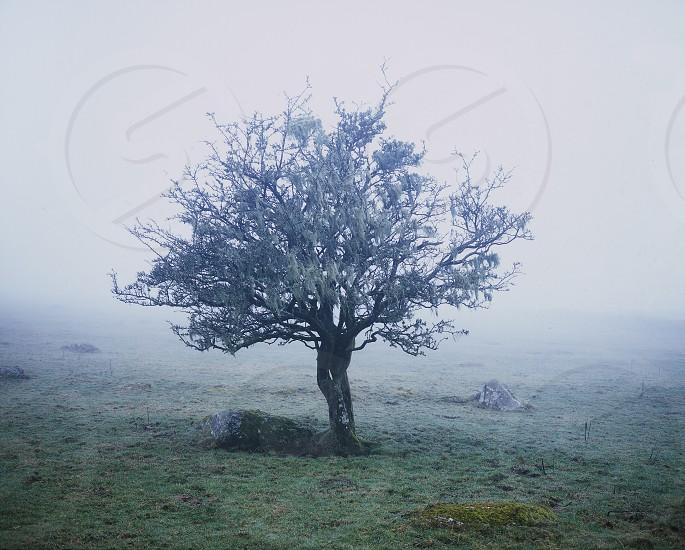 Tree in fog on Dartmoor photo