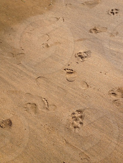 foot track from the sand  photo