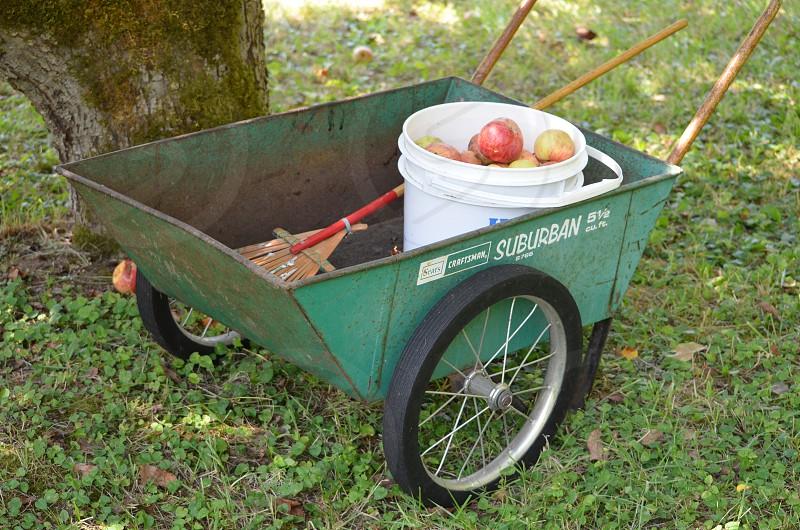 Apples in bucket & wheelbarrow Farm to Table photo