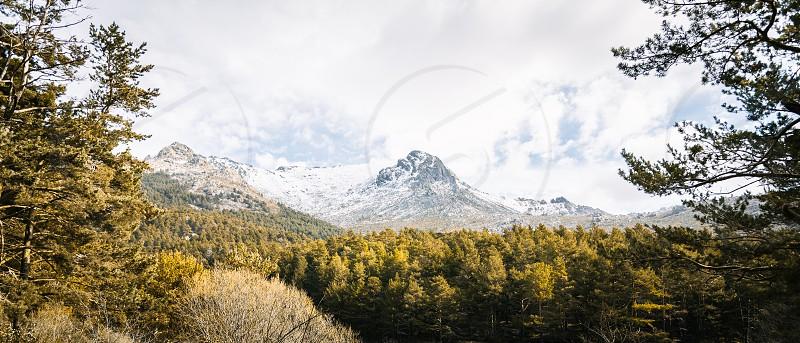 Woodland and snow capped mountain range. Navacerrada Madrid Spain photo