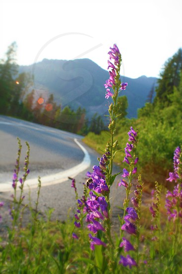 """""""Passers by""""  A road curves through the mountains passing by a field of flowers. photo"""
