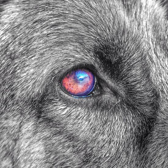 In a dogs eye photo