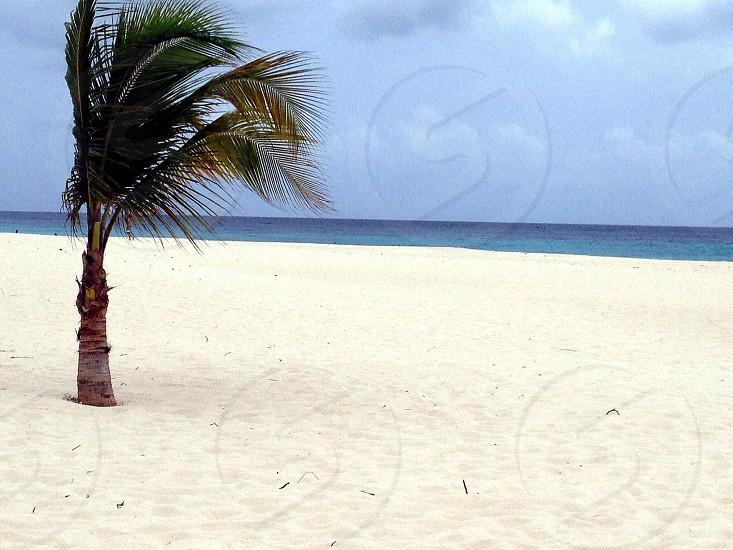 Aruba beach skyscape photo
