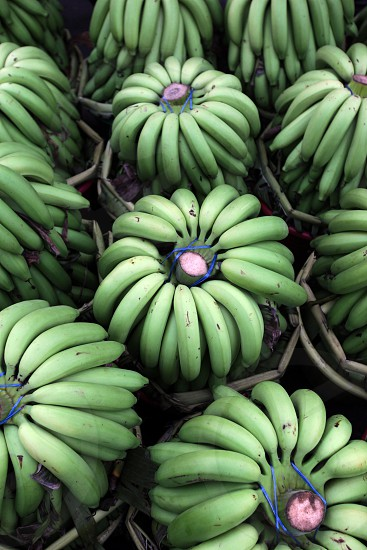bananas at the Pak Khlong Food Markt in Banglamphu in the city of Bangkok in Thailand in Suedostasien. photo