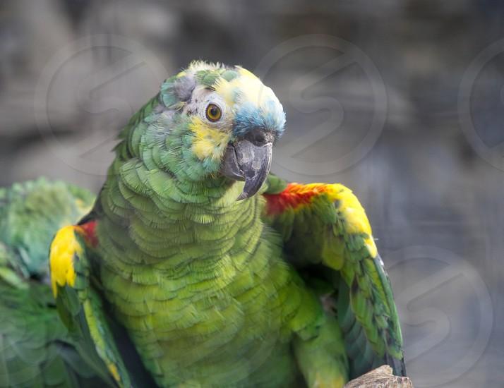 A green parrot in the garden.                              photo
