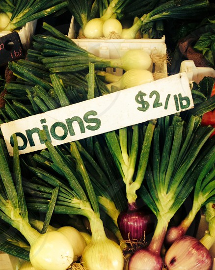 onion price of 2 dollars per pounds photo