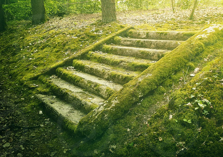 Ancient stone stair steps in the woods covered by green moss. Mysterious fairytale scene with an old stairway. photo