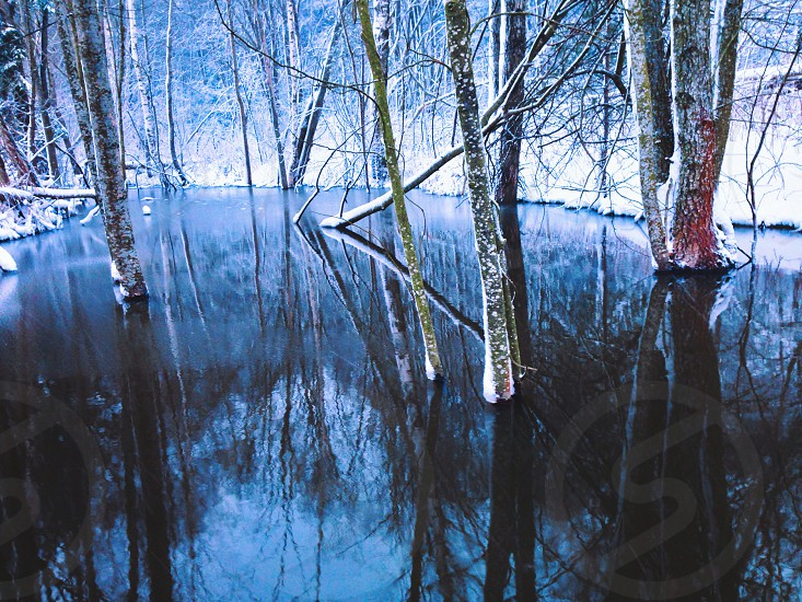 trees on water view photo