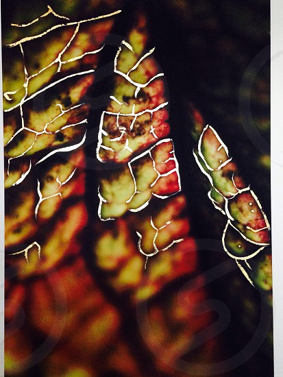 Abstract leaf 'Natures Blueprint' collection. photo
