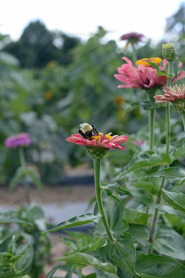 Farm bee flower photo
