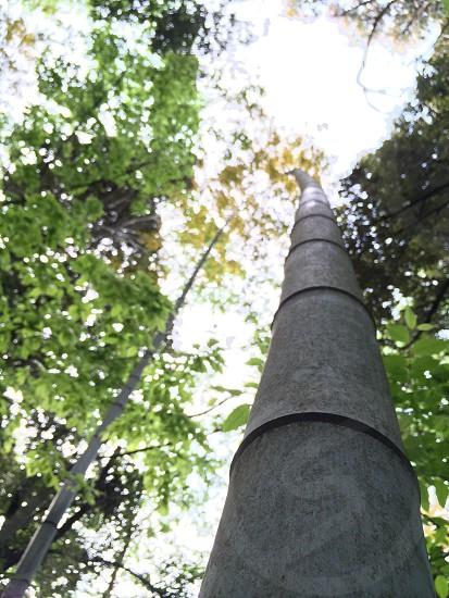 空に向かって伸びる竹(Bamboo which grows towards the sky) photo