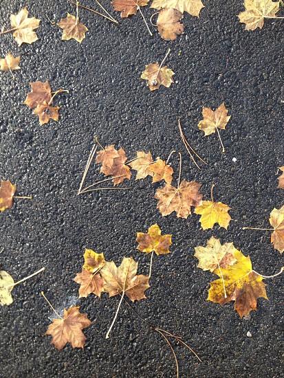 Fall Pathway photo