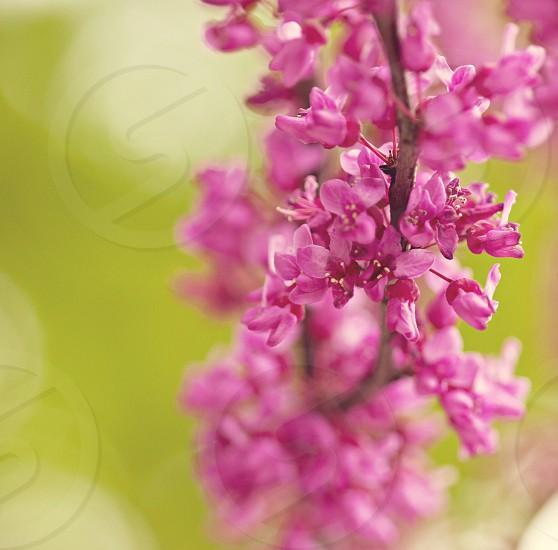 purple flower macro photo photo