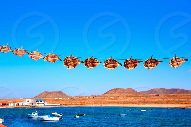 Majanicho dried Parrot fish Vieja in Fuerteventura Canary Islands Sparisoma cretense photo