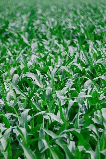 Corn fields background textures photo