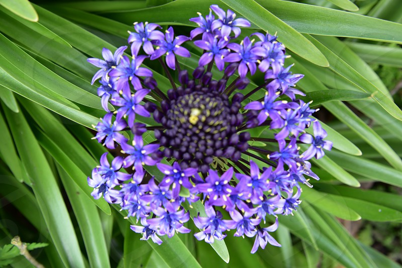 Spring flowers purple blue green. photo