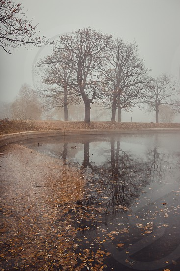Autumn misty landscape with pond in the park photo