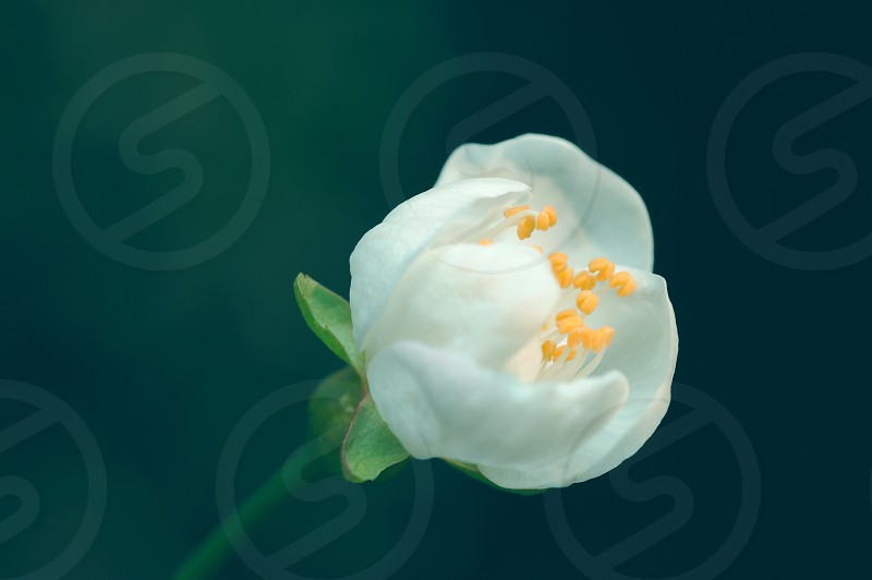 white ornamental flower photo