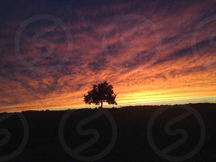 Sunset Sky Clouds Countryside Tree photo