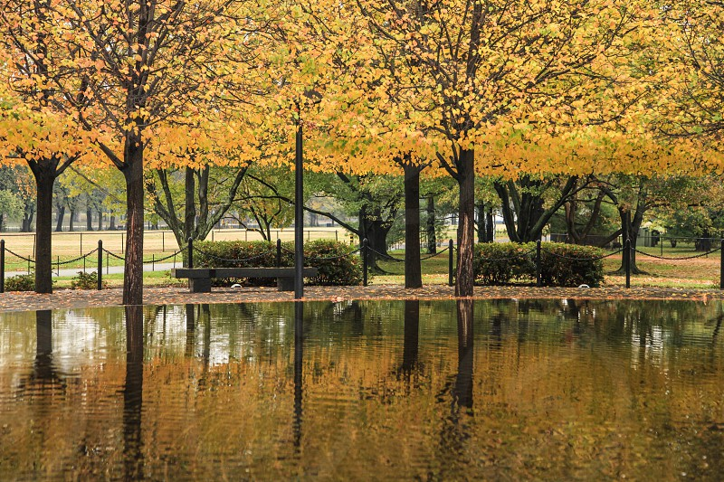 Fall foliage outside the Vietnam Veterans Memorial in Washington D.C.  photo