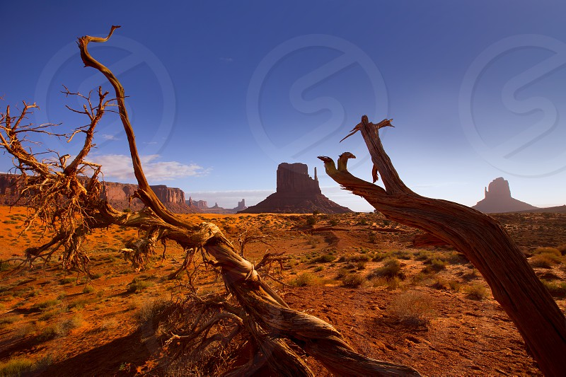 Monument West Mitten Butte in morning from dired tree branches Utah photo