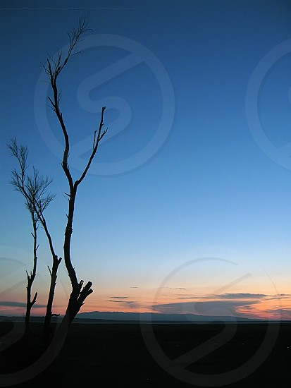 tree branches under sunset photo