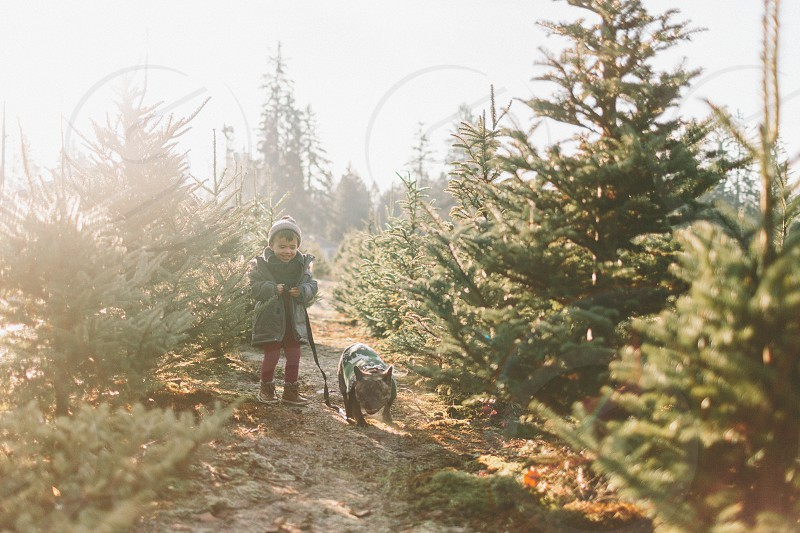 A little boy and his dog at the Christmas tree farm.  photo