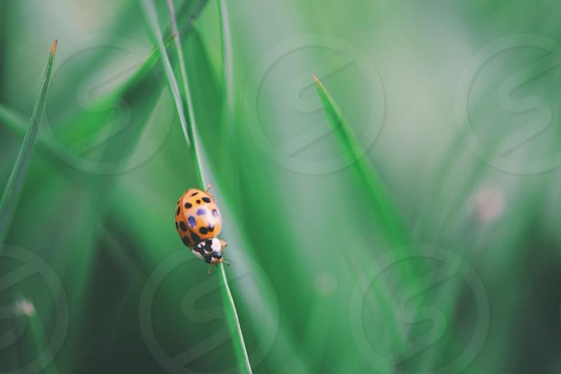 ladybug on green plant macro photography photo