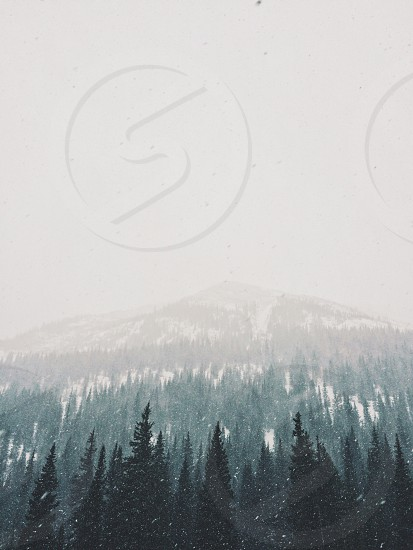green trees on snow covered mountain slope below gloomy sky during daytime photo