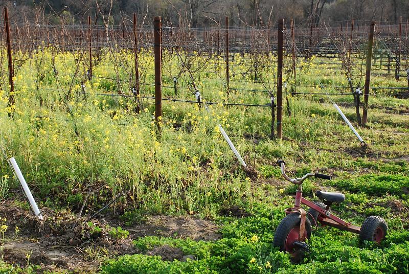 tricycle vineyard photo