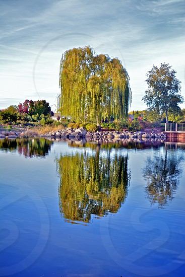 Willow tree reflections. photo
