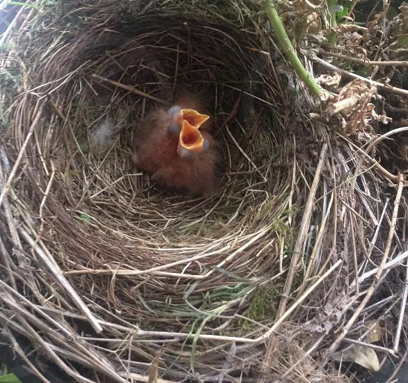 brown nest photo