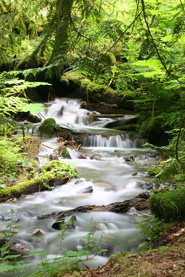 forest water photo