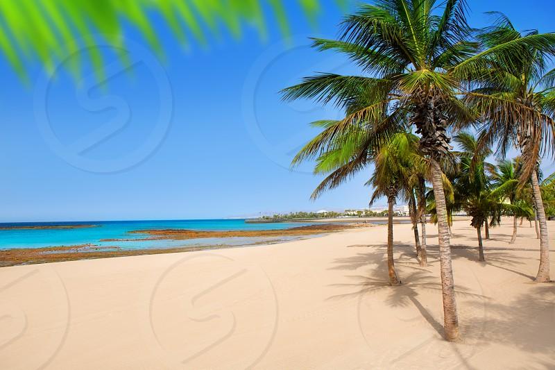 Arrecife Lanzarote Playa Reducto beach tropical palm trees at Canary Islands photo