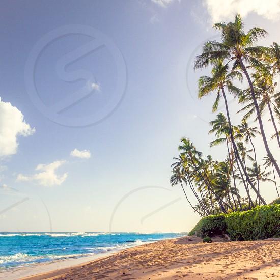 Diamond head beach Hawaii Oahu  photo