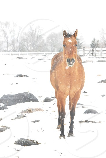 brown horse on snow field during daytime photo