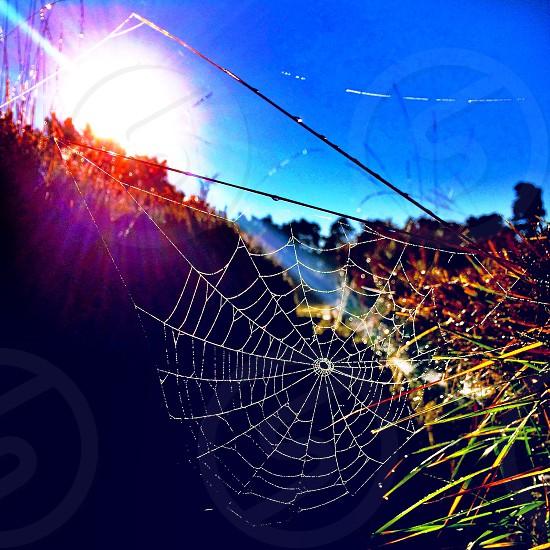 Winter web.  photo