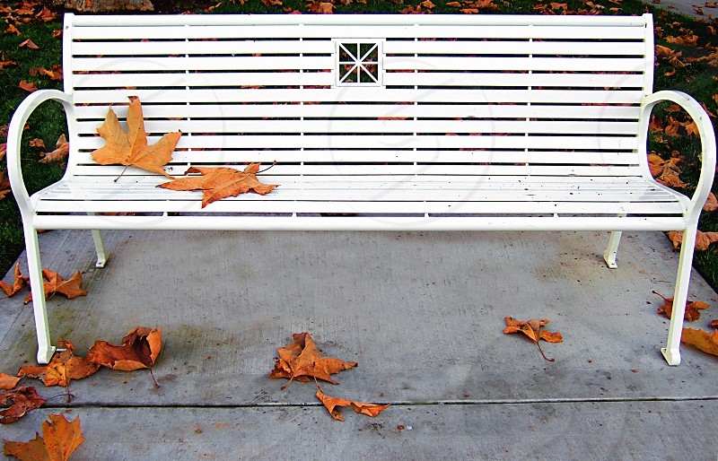 Fallen Autumn leaves drop on and under a white park bench. photo