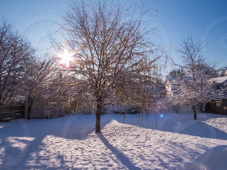 Snowy Backyard  photo